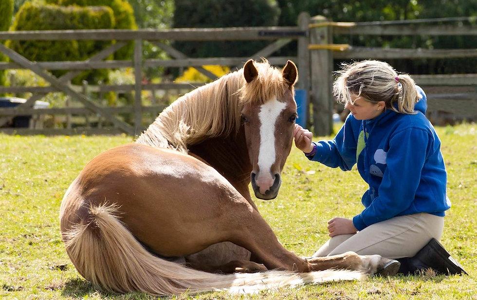 003-AG-HP-mid-testimonial-woman-horse-si