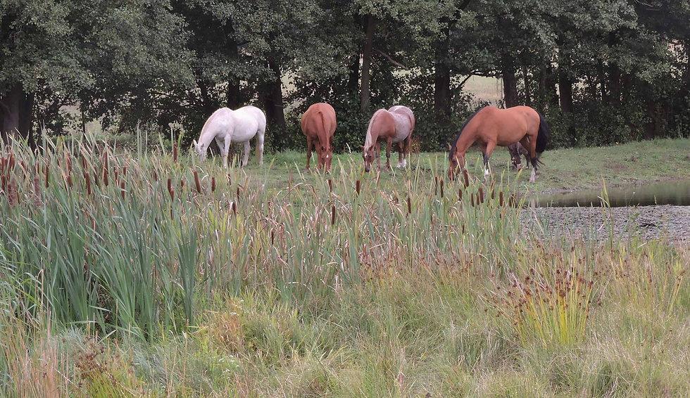 AG-horses-grazing-field-2500-x-1445.jpg