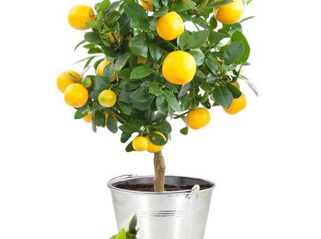 Ce que les plantes on a nous apprendre
