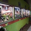 Rainforest 4.jpg