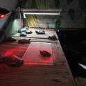 Turtles 8.jpg