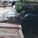 Turtles 6.jpg
