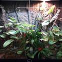 Jungle room 2.jpg