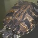 Turtles 4.jpg
