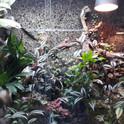 Jungle room.jpg
