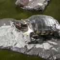 Turtles 5.jpg