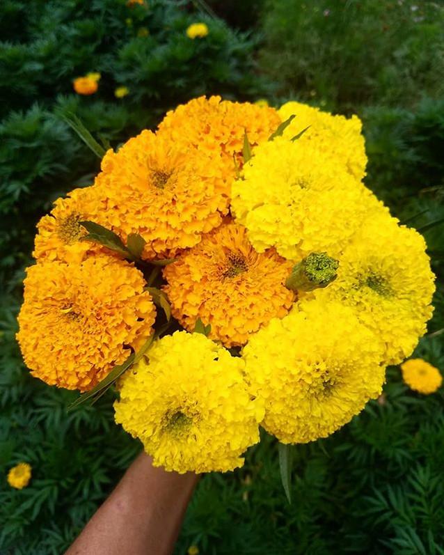Harvesting handfuls of sunshine today, b