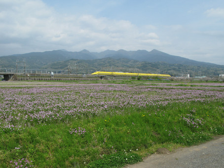 【NEW】ドクターイエローとれんげ畑