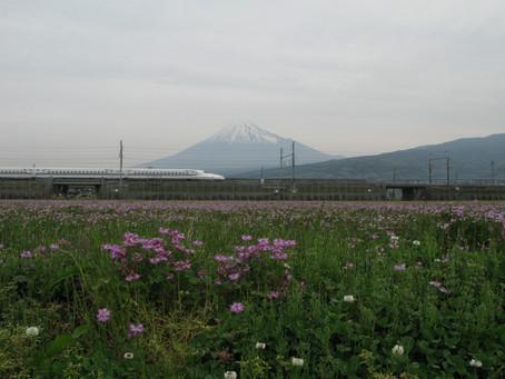 本日の富士山とれんげ畑とN700系