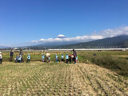 第5回富士山れんげまつり開催決定
