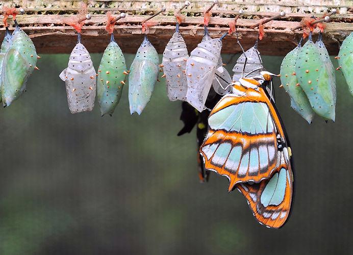 caterpillar-agile.jpg