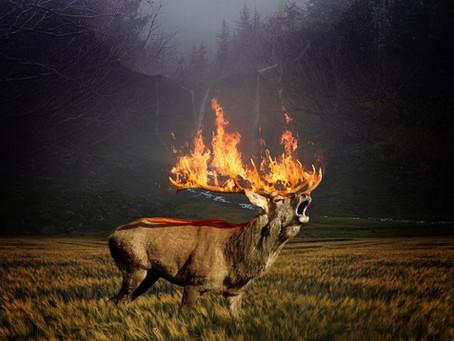 Площадь природных пожаров в Красноярском крае за сутки увеличилась на более чем 50 тыс. га и теперь