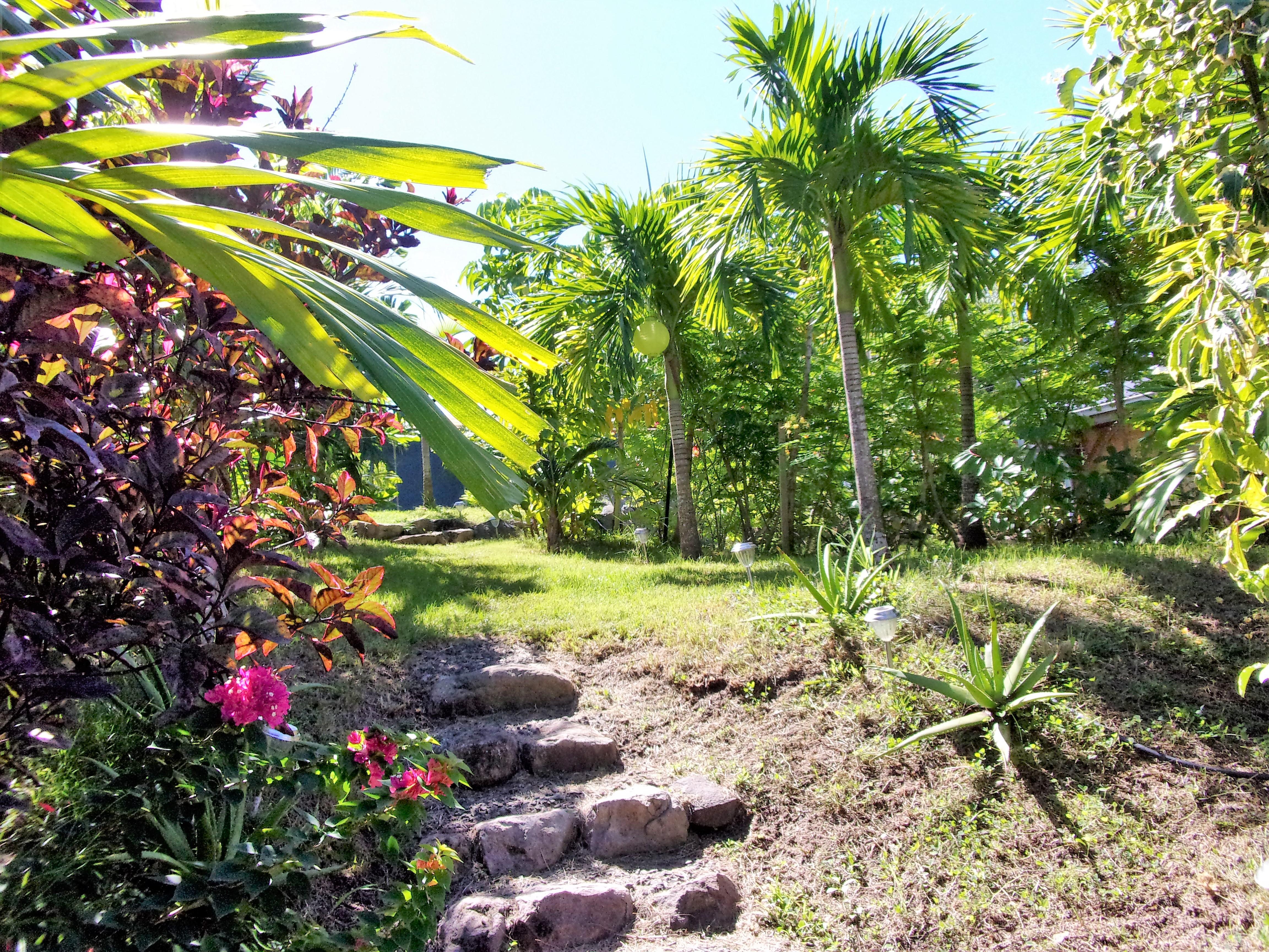 Jardin Location Pitaya