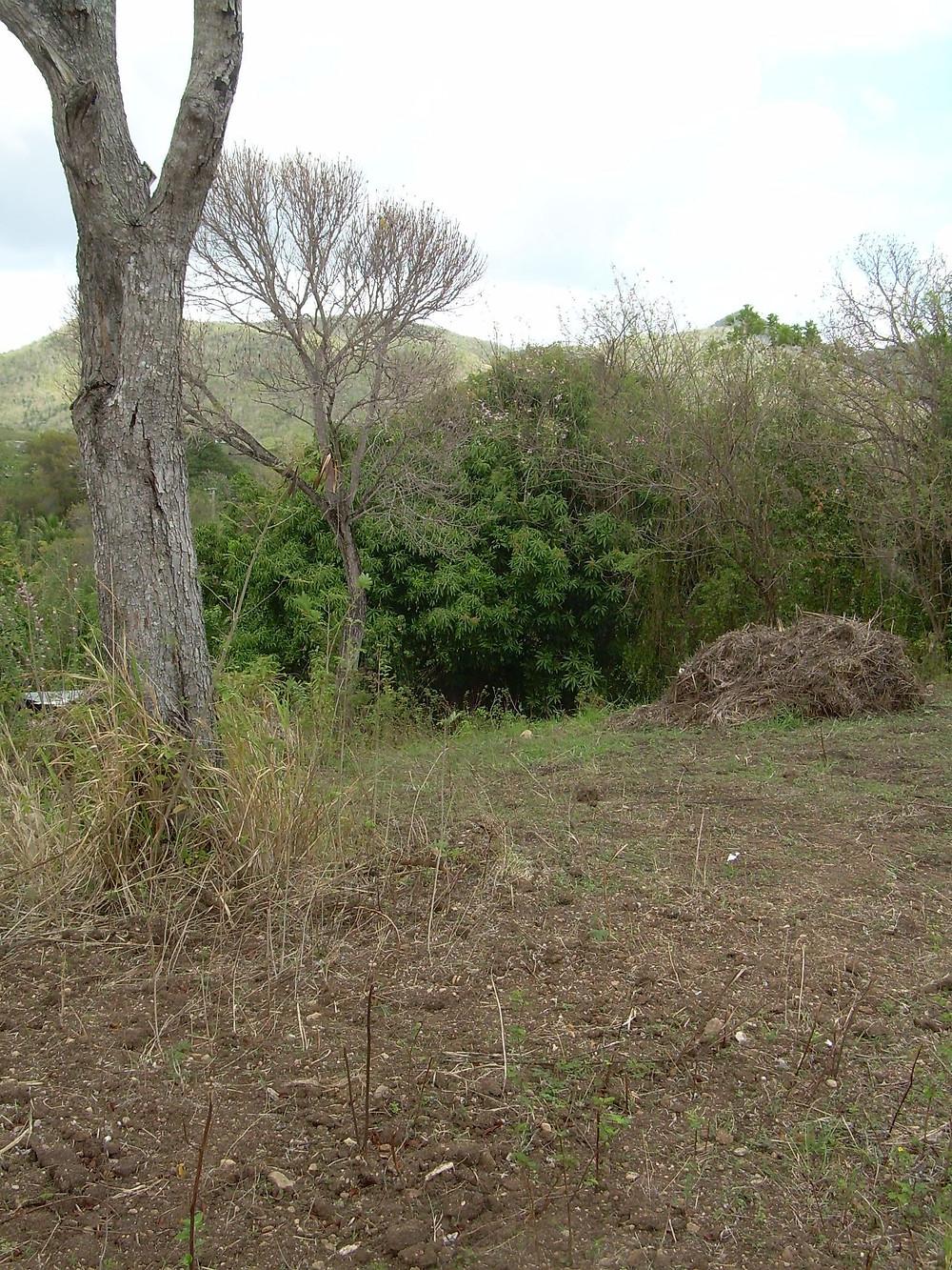 Le terrain avant la construction Janvier 2014 Location Pitaya