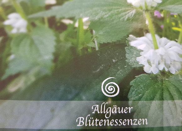 Allgäuer Blütenessenz Weisse Taubnessel - Sanftmut