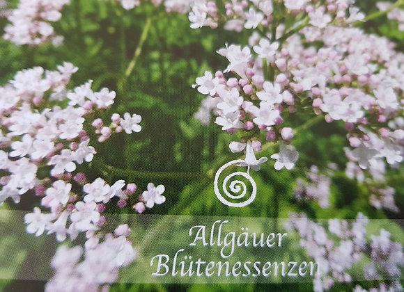 Allgäuer Blütenessenz Baldrian - Gelassenheit erfahren