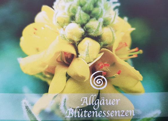 Allgäuer Blütenessenz Königskerze - sich wieder aufrichten