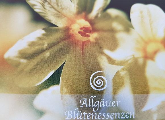 Allgäuer Blütenessenz Schlüsselblume - Leichtigkeit erfahren