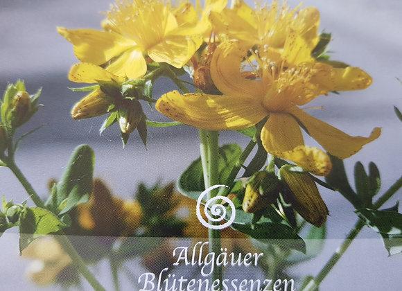 Allgäuer Blütenessenz Johanniskraut - Lichtkraft aktivieren