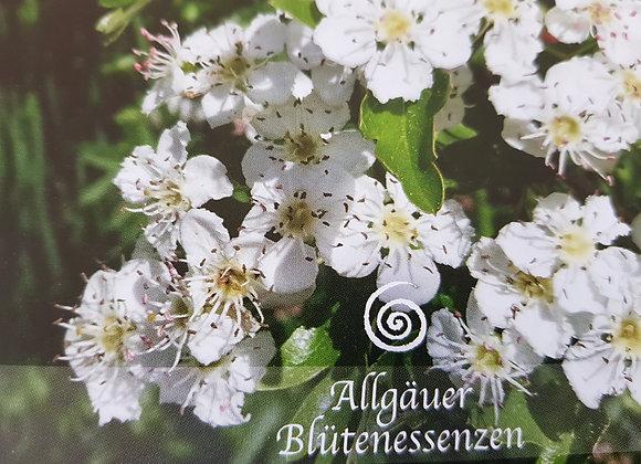Allgäuer Blütenessenz Weissdorn - Herzensweisheit spüren
