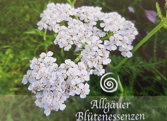 Allgäuer Blütenessenz Schafgarbe - Ausgleich erfahren