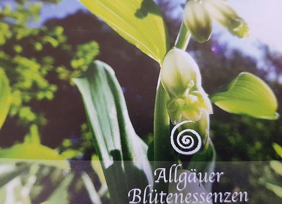Allgäuer Blütenessenz Salomonsiegel - eigene Weisheit empfangen
