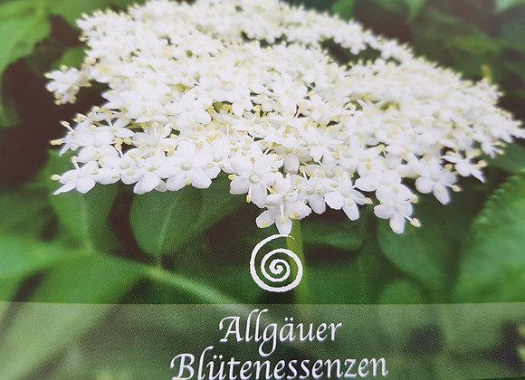 Allgäuer Blütenessenz Holunder - neue Wege erkennen
