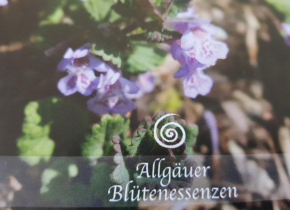 Allgäuer Blütenessenz Gundermann - inneren Frieden erfahren