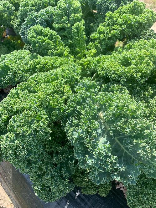 Organic Kale Bunch