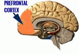 Prefrontal Cortex and ADHD