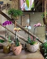 Orquídea na Flora ECO
