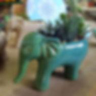 Cachepo de elefante com suculentas