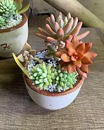 Suculentas na Flora ECO