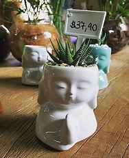 Cachepo de Buda com suculenta
