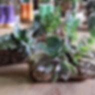 Suculentas plantadas em cortiça