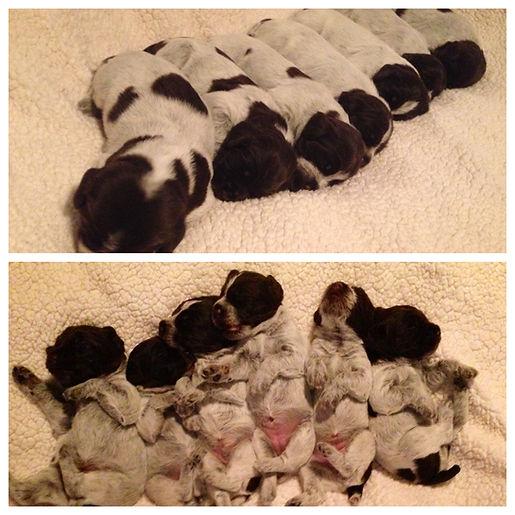Puppy Collage.JPG