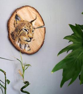 lynx mur.jpg