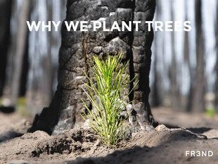 Why we plant trees. SUSTAINABLE FASHION