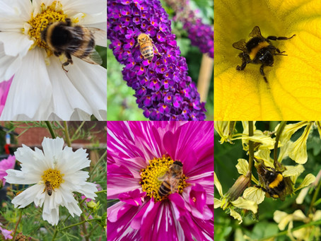 Bees, Bees and Bees!
