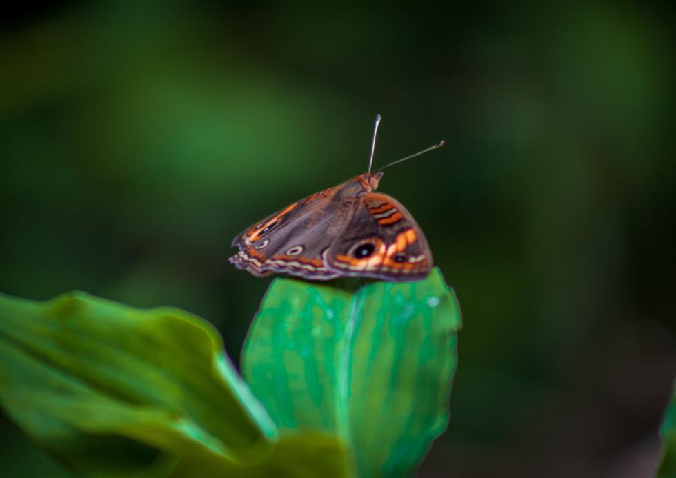 Butterfly season.jpg
