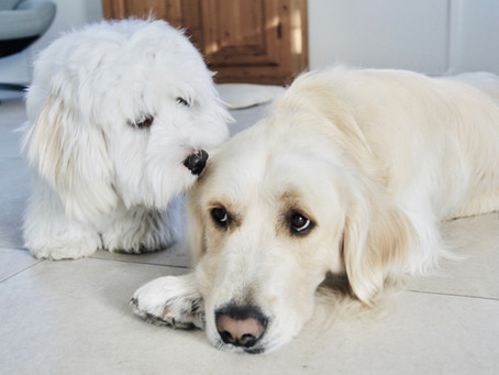 Dürfen Vermieter die Haltung von Haustieren verbieten?
