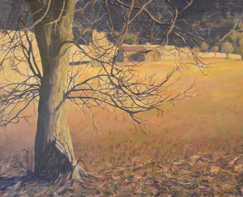 Nut tree on a field, 100x120 cm