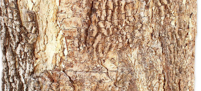 sezione-trasversale-del-tronco-di-albero