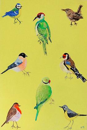 Garden Birds Greetings Cards