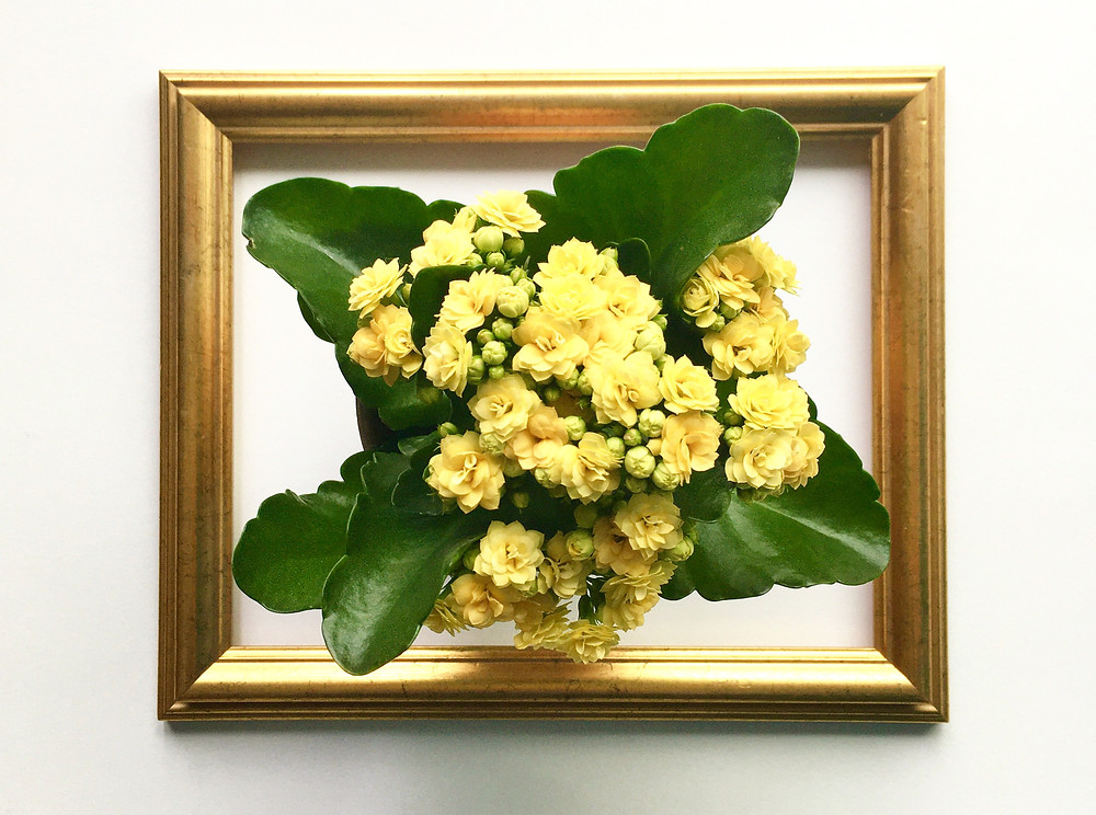 A second-hand gold frame with a yellow flowered plant in the centre.