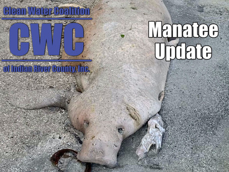 Manatee Update and State of Emergency