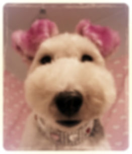 Dog groomer Wexford foxterrier