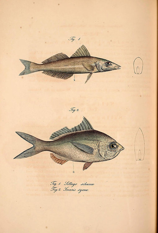 FishSea_A3035