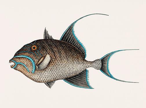 FishSea_A3020