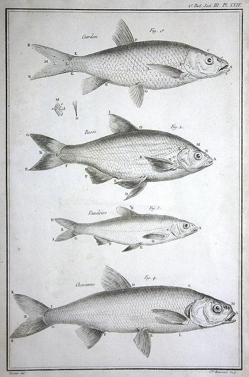 FishFresh_A3036